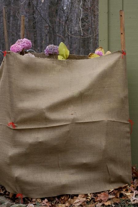 wrapped_hydrangea