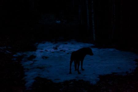 hiking at dusk 6