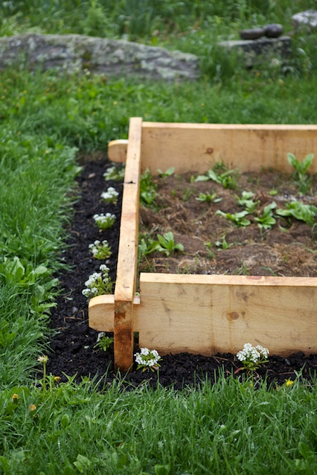wet raised bed