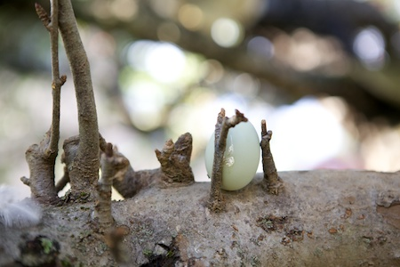 egg on tree branch 2