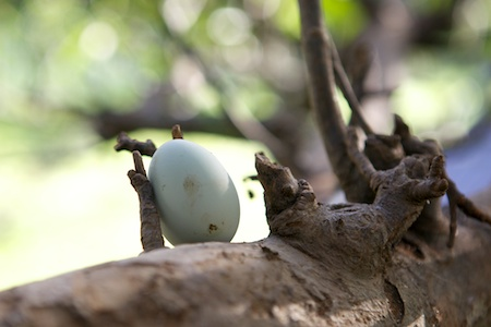 egg on tree branch