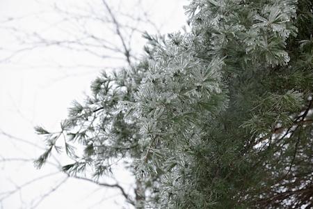 Ice Storm 7