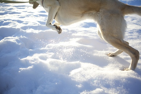 Tara in Snow 10