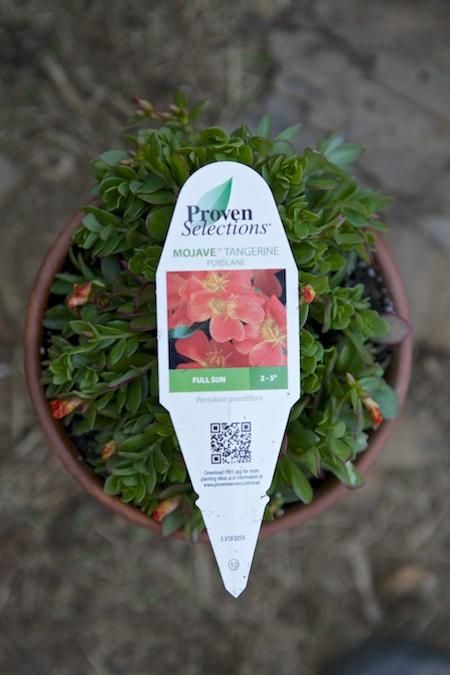 plant tags 1
