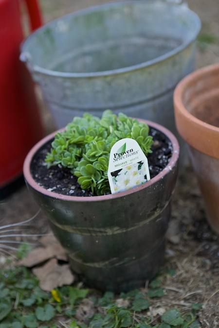 plant tags 2