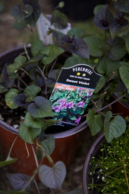 plant tags 5
