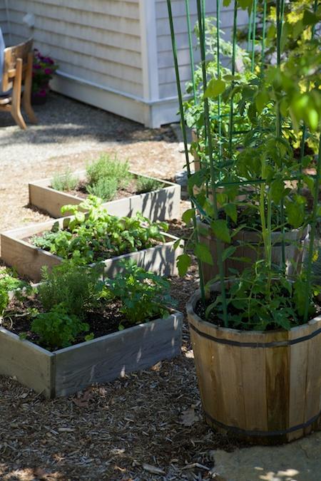 belfast garden tour 2 24