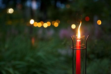 mclaughlin garden illuminated 11