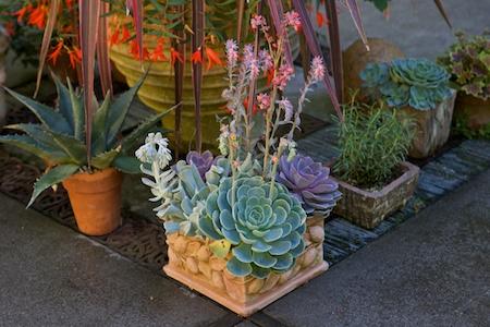 dunn garden containers