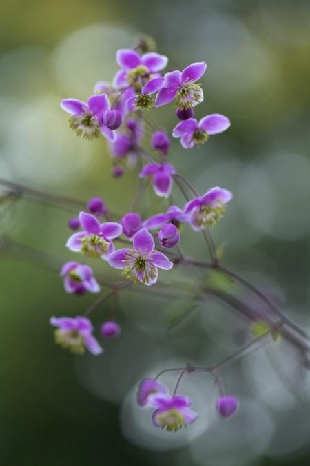 new plants from hidden gardens 3