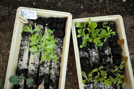 planting fall crops 2