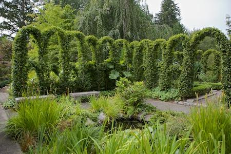 Herronswood hedge garden 7