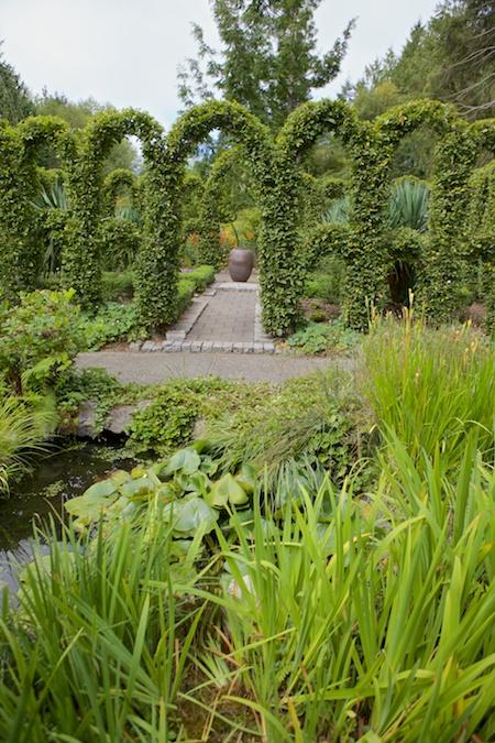 Herronswood hedge garden 8