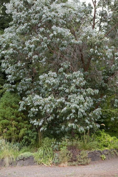herons wood plants 2