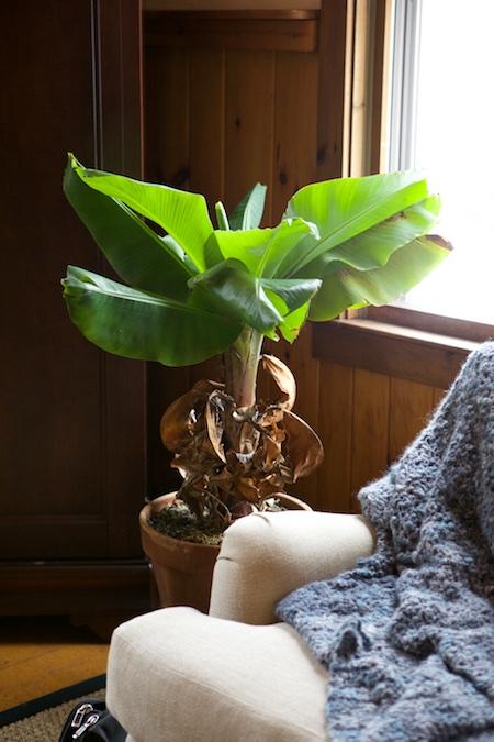 houseplants 3