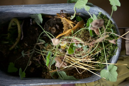 houseplants 6