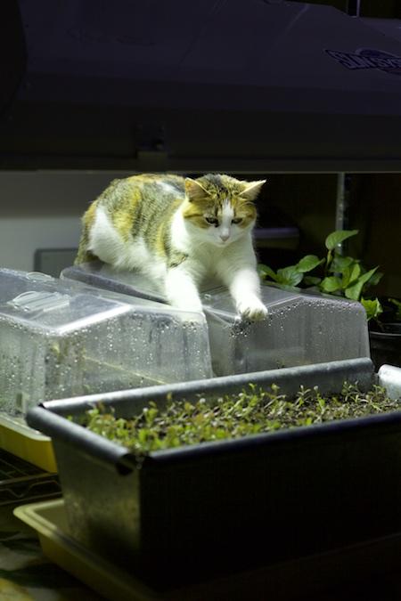 cat under grow light 1