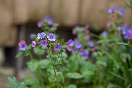 garden update 4