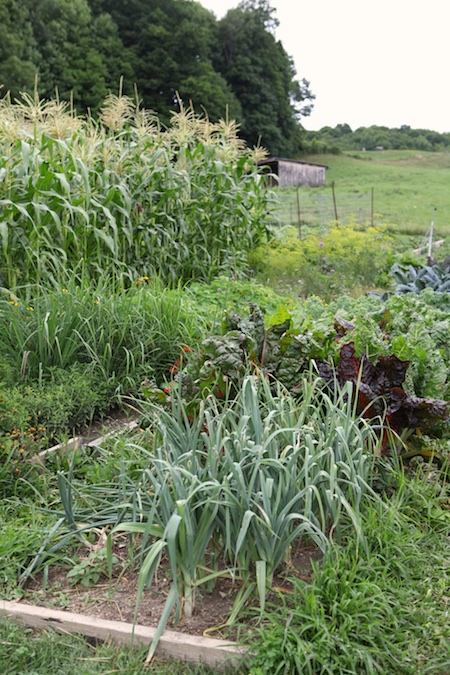 shelburne farms edible gardens 3