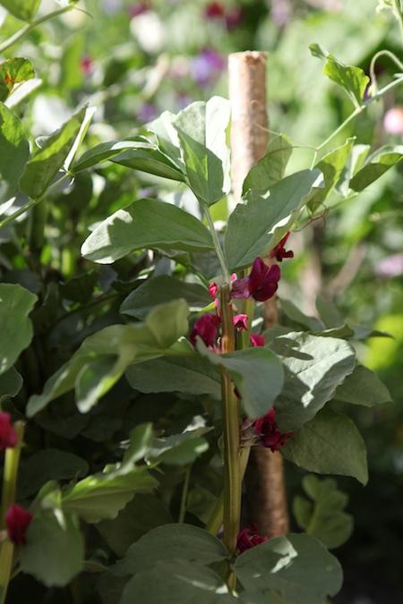 lacko-slatt-upper-garden-1