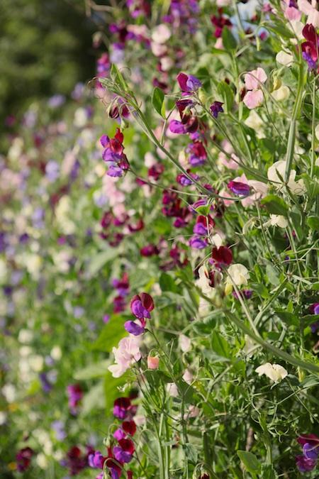 lacko-slatt-upper-garden-16