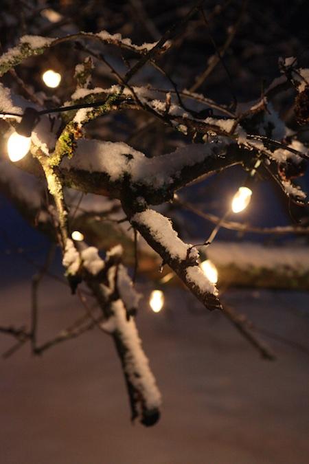 lights-on-apple-tree-3