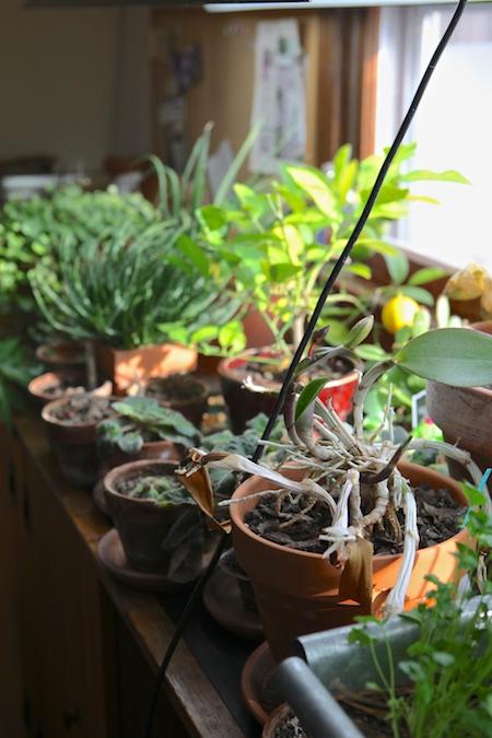 indoor-garden-1