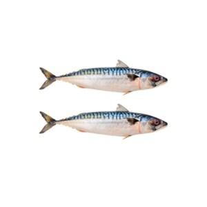 Titus Fish (1 Carton)