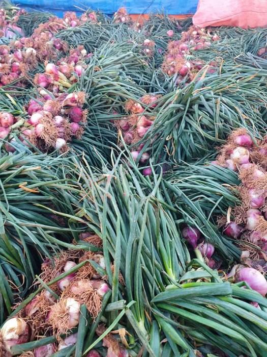 cebollas rojas de Bolivia