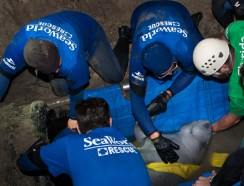 SeaWorld_Orlando_Animal_Rescue_Team_Assists_with_Rescue_of_19_Manatees