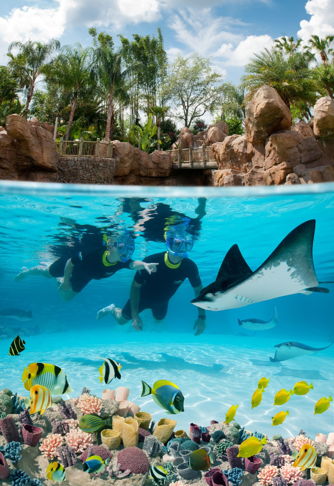 Discovery Cove Exclusive Fall Offer for Florida Residents