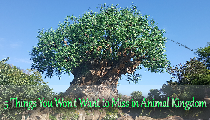 5 Things You Won't Want to Miss in Disney's Animal Kingdom
