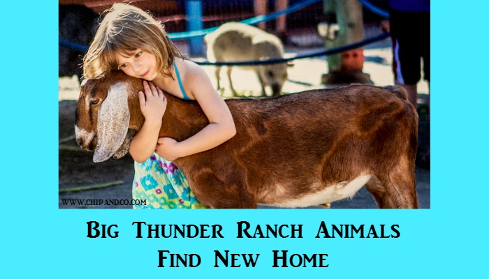 Big Thunder Ranch Petting Zoo Animals Find New Home