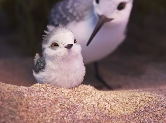 A Look Into the World of Pixar's Piper