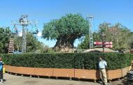 Preparations Begin for 'The View' Taping at Animal Kingdom