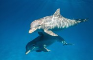 DisneyNature heads under the Sea with all new trailer for