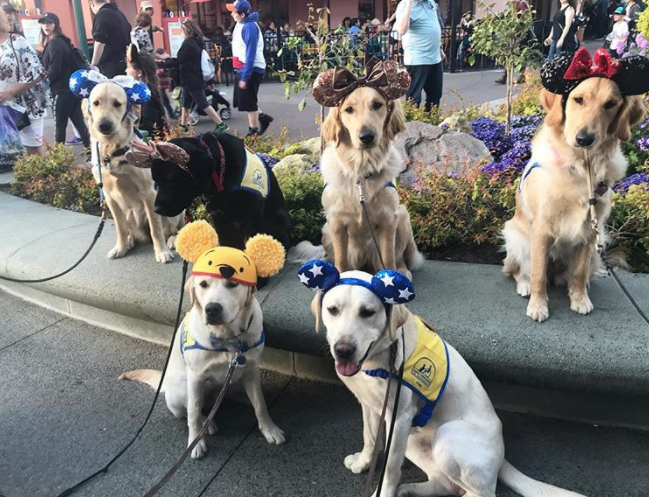 It Doesn't Get More Magical Than Dogs at Disneyland!
