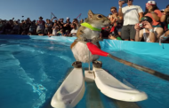 Orlando's Iconic Water Skiing Squirrel, Twiggy, Set to Perform One Final Time This Weekend