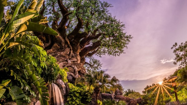 Disney's Animal Kingdom Park Extra Magic Hours Adjusted for New Years Week