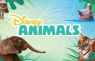 New Disney Animal Videos Featured on the DisneyNOW App