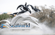 SeaWorld Offers FREE Admission for U.S. Military Veterans and their Families
