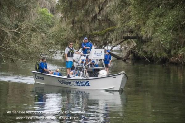 SeaWorld Rescue Team Saves Juvenile Manatee 2