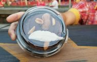 Dumbo's Magic Feather Brownie is Now Available at Storybook Circus