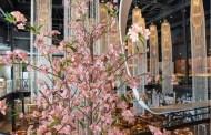 Sakura Festival at Morimoto Asia in Disney Springs Is Back By Popular Demand