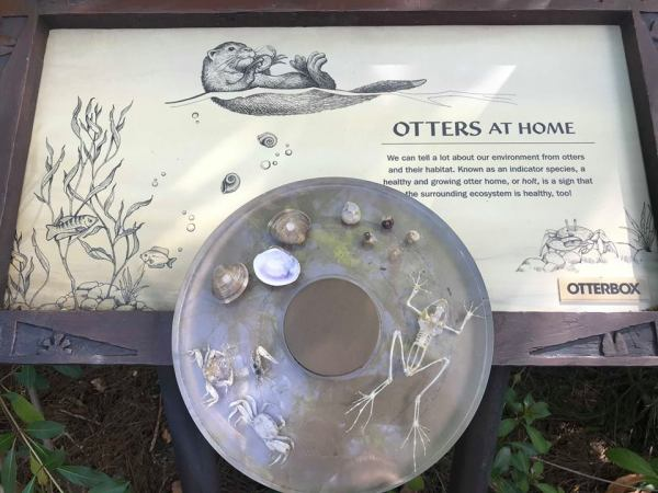Photos: New Otters Grotto at Disney's Animal Kingdom Park.