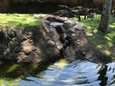otter slide 3