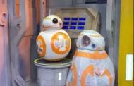 Cutest Little BB-8 at Walt Disney World
