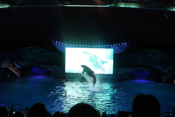 Light Up Your Summer With Electric Ocean at SeaWorld Orlando 8