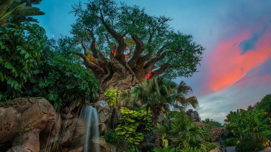 Disney's Animal Kingdom Guest Experience Team Starting Soon