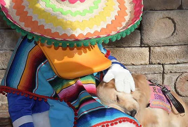 Service Dog Nala Gets Reunited With Donald Duck At Epcot!